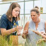 Three women biology researchers examine plant closely